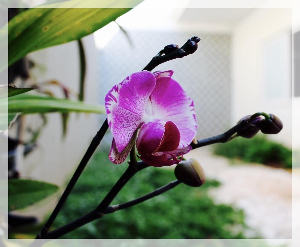thumb_IMG_5649_1024_Fotor